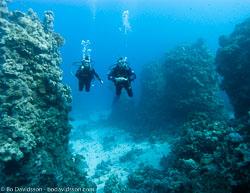 BD-090405-St-Johns-4052634-Homo-sapiens.-Linnaeus.-1758-[Diver].jpg
